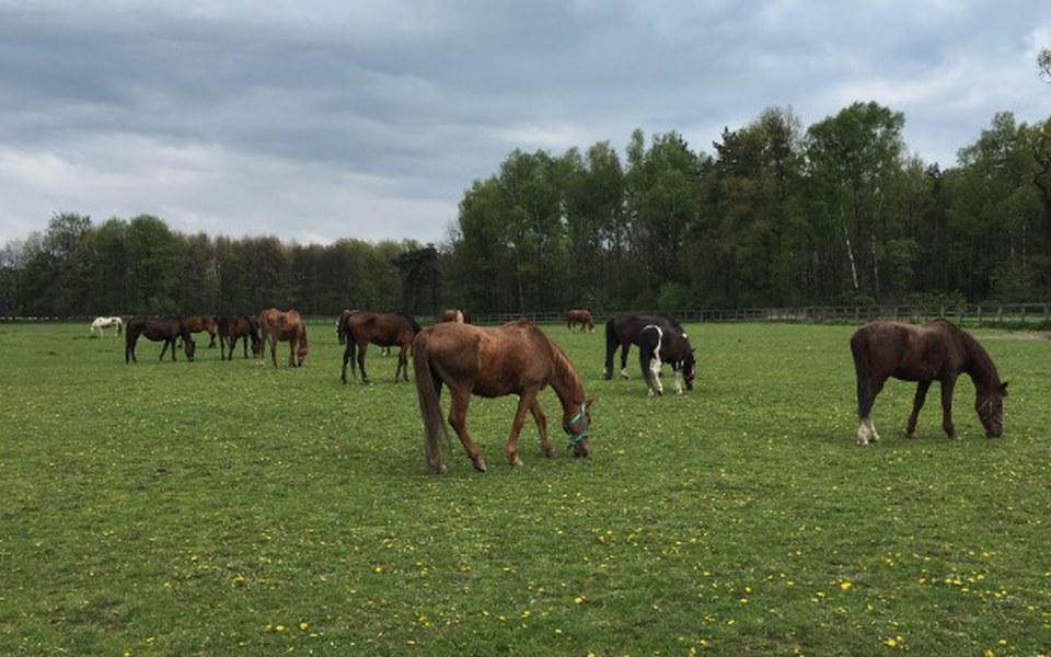 Zbiórka Derki dla końskich staruszków... - zdjęcie główne