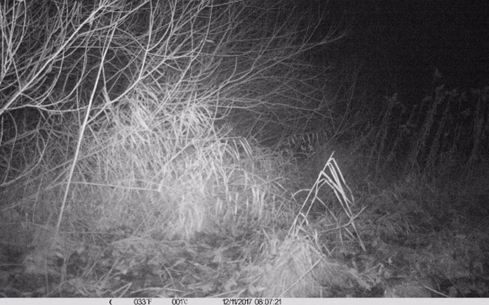 Zbiórka Fotopułapki do monitoringu wilka - zdjęcie główne