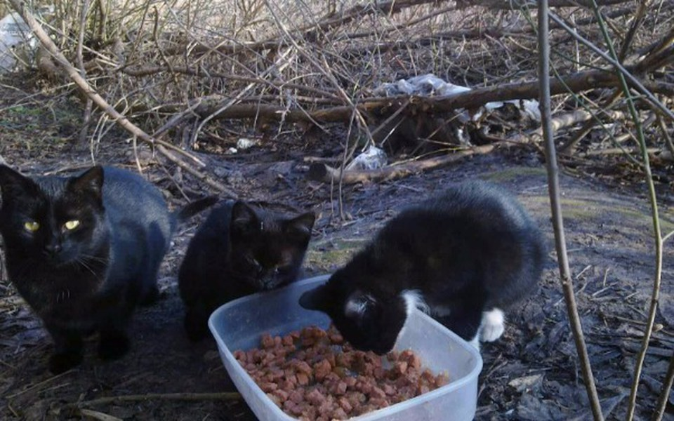 Zbiórka Pomóżmy pomagać bezdomnym kotom! - zdjęcie główne