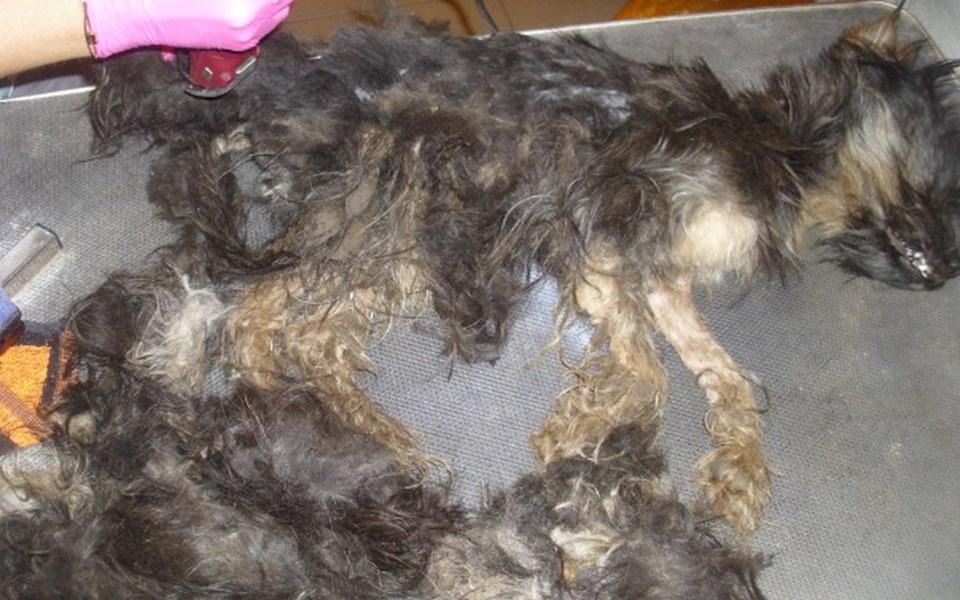 Zbiórka Leczenie chorych zwierzaków - zdjęcie główne