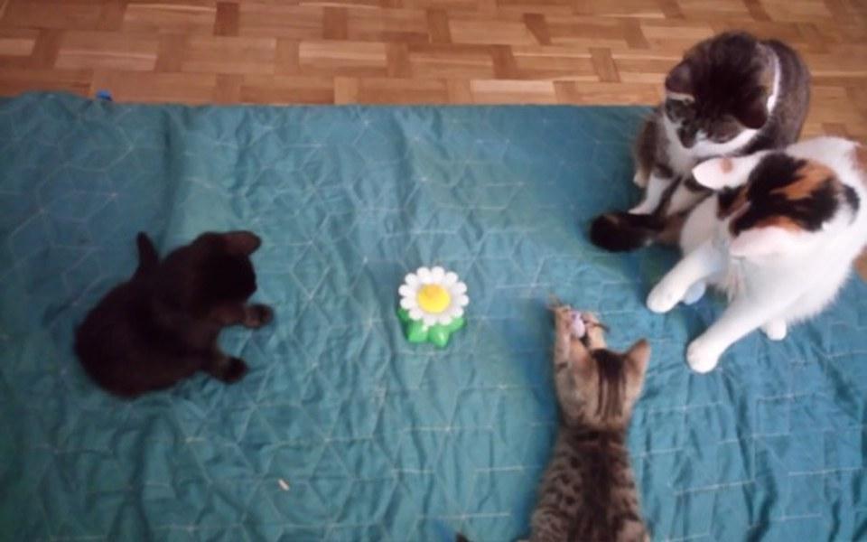 Zbiórka Dla zwierzętasów - zdjęcie główne