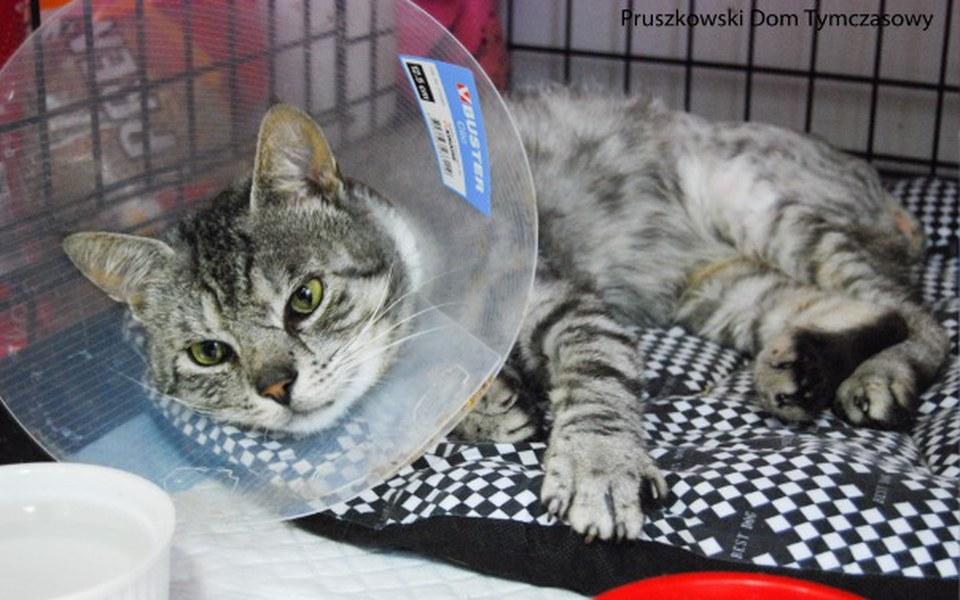 Zbiórka Ratuj połamane kocie dziecko! - zdjęcie główne