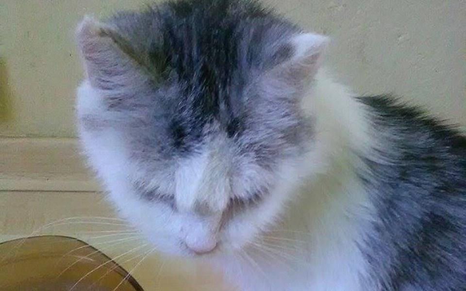 Zbiórka Prośba o pomoc dla 9 kotów - zdjęcie główne