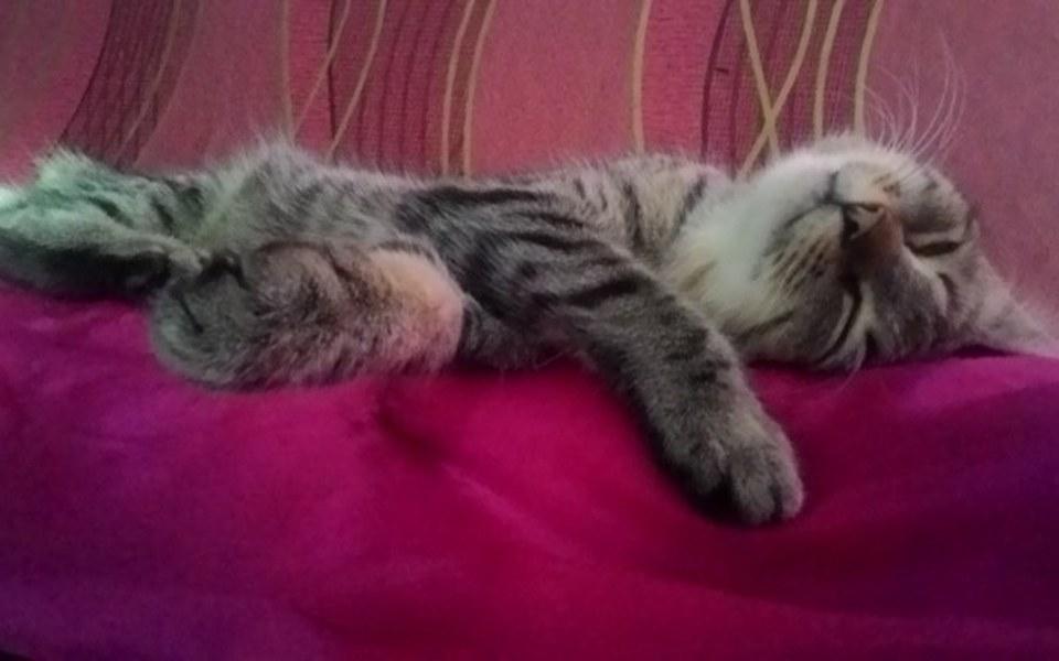 Zbiórka Sterylizacja bezdomnych kotek - zdjęcie główne