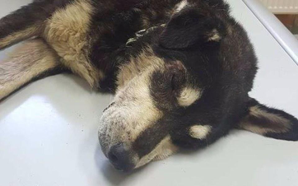 Zbiórka Stare psisko chce żyć - ratujemy - zdjęcie główne