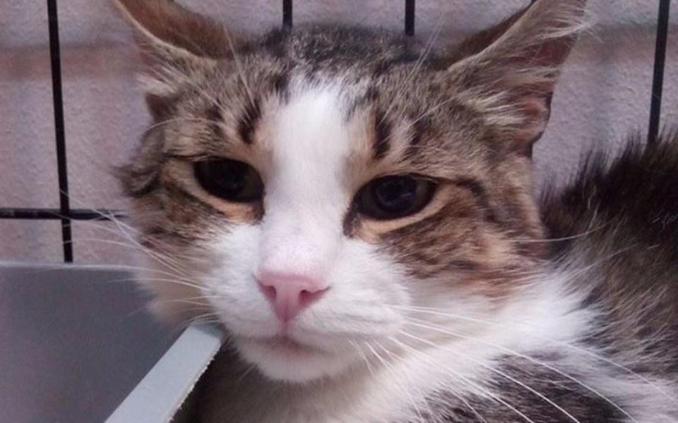 Zbiórka Frugo - mały koci połamaniec - zdjęcie główne