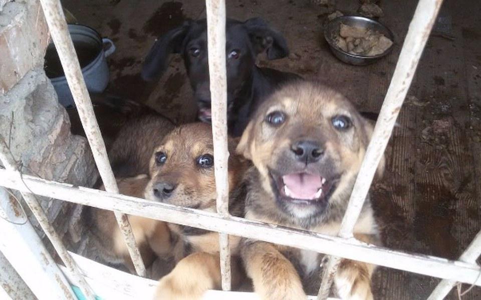 Zbiórka Ratujemy szczeniaki z Białorusi! - zdjęcie główne