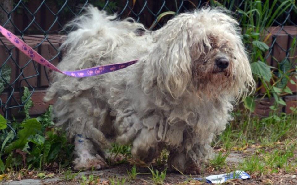 Zbiórka Psy z interwencji....POMÓŻ! - zdjęcie główne