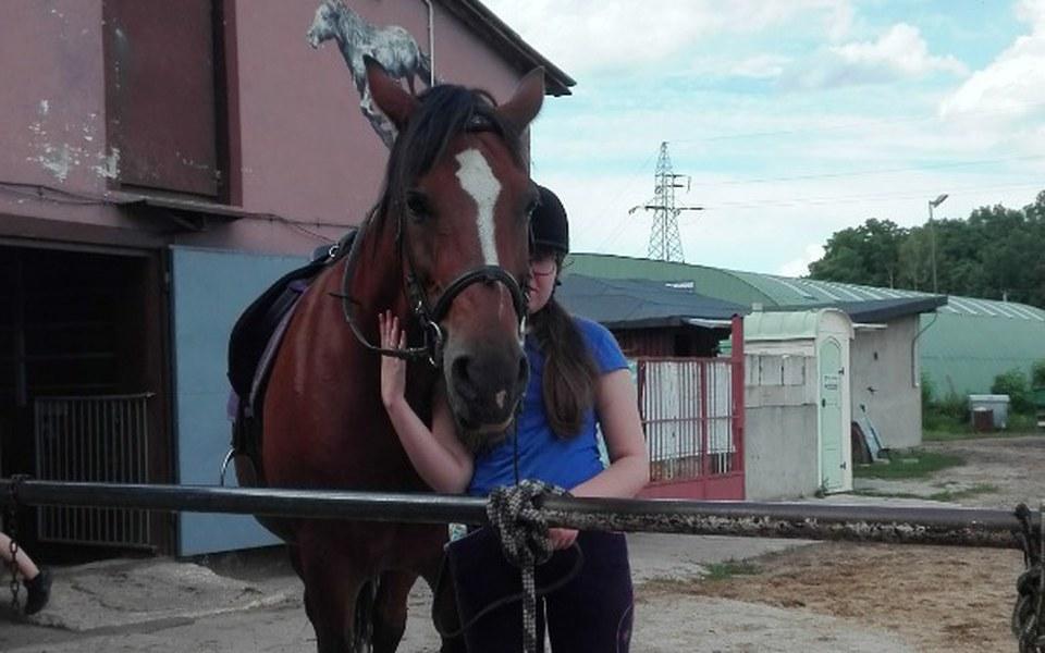 Zbiórka zbiórka na konia - zdjęcie główne