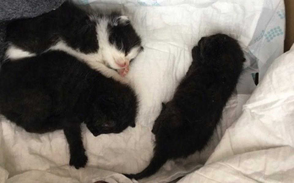 Zbiórka Ratujemy życie kocich osesków - zdjęcie główne