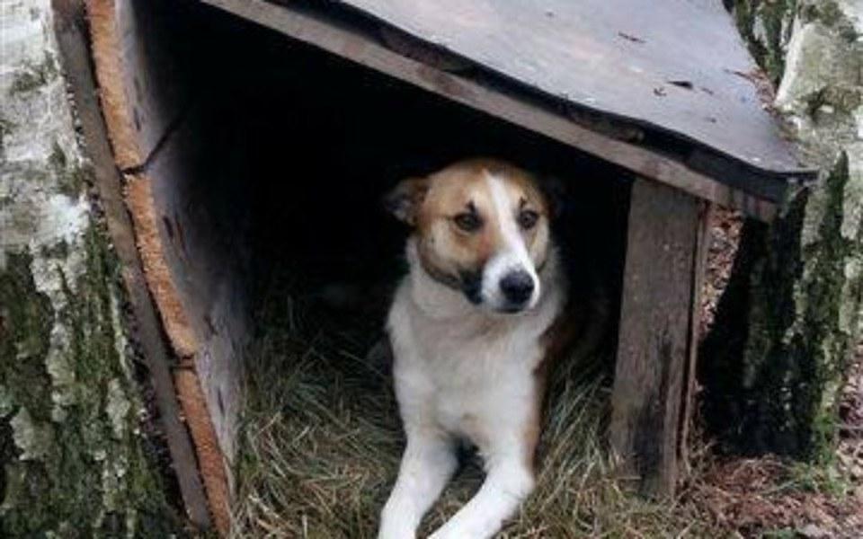 Zbiórka Wyrzocony pies i Wielki Bohater! - zdjęcie główne