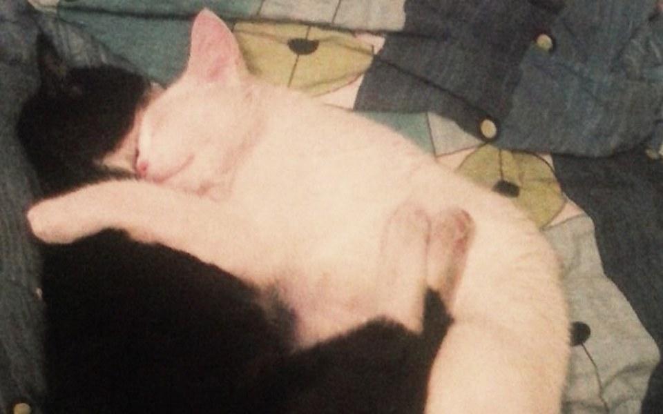 Zbiórka Spłata długu za leczenie kotów - zdjęcie główne
