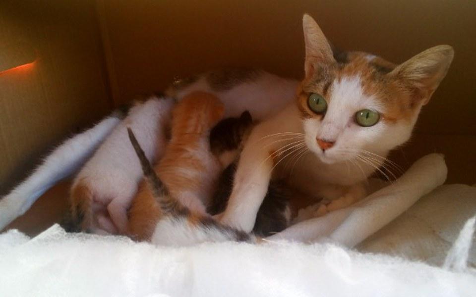 Zbiórka Leczenie greckich kotków - zdjęcie główne