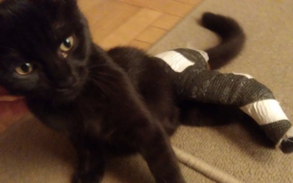 Zbiórka Znaleziony kotek ze złamaniem - zdjęcie główne