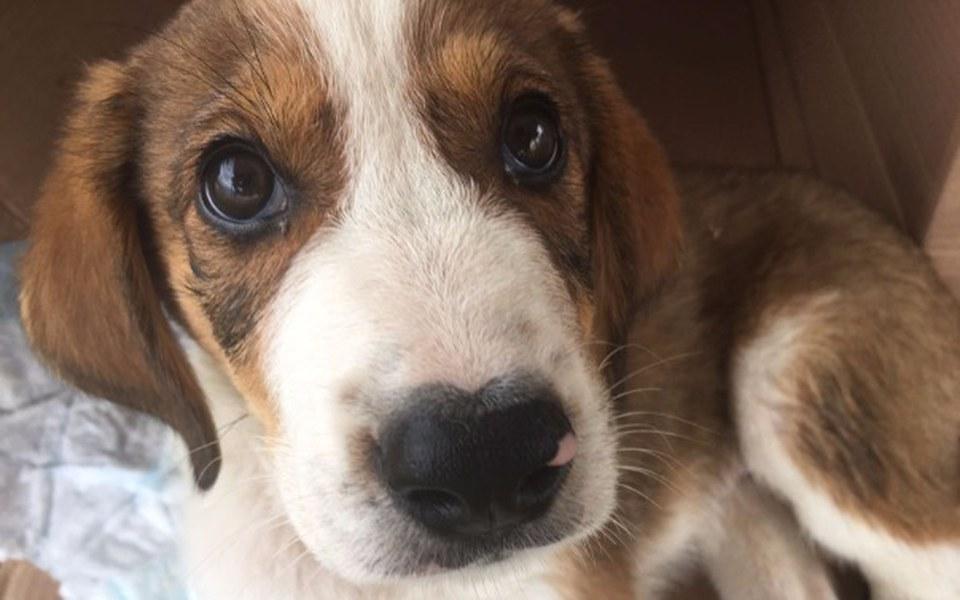 Zbiórka Połamany szczeniak i rodzeństwo - zdjęcie główne