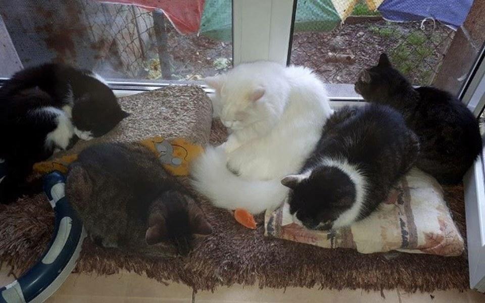 Zbiórka Pomóż zwierzakom przetrwać zimę! - zdjęcie główne