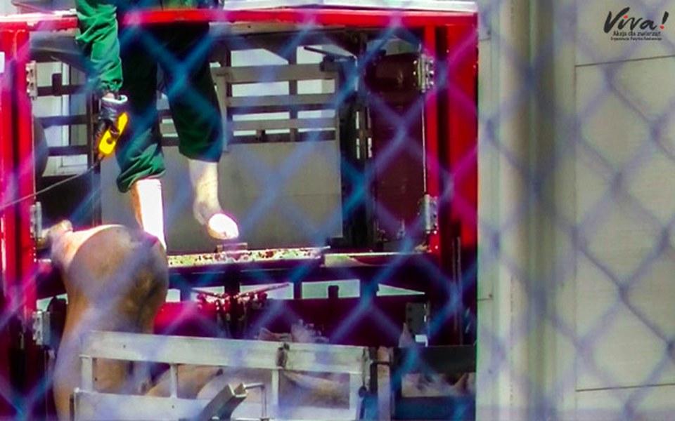 Zbiórka Los zwierząt hodowanych na mięso - zdjęcie główne