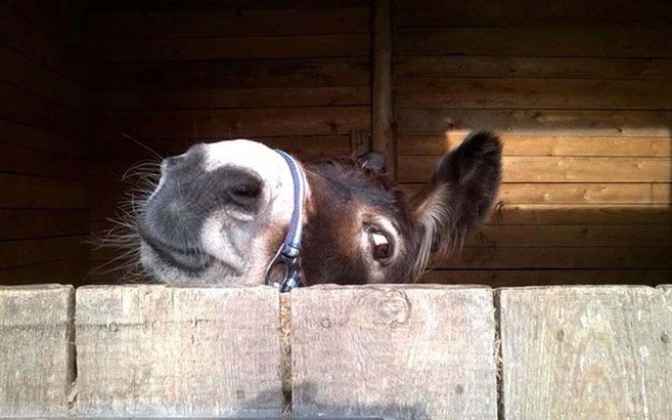 Zbiórka Siano dla koni na zime - zdjęcie główne
