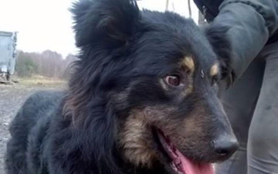Zbiórka Bruno, taki zwykły Pies - zdjęcie główne