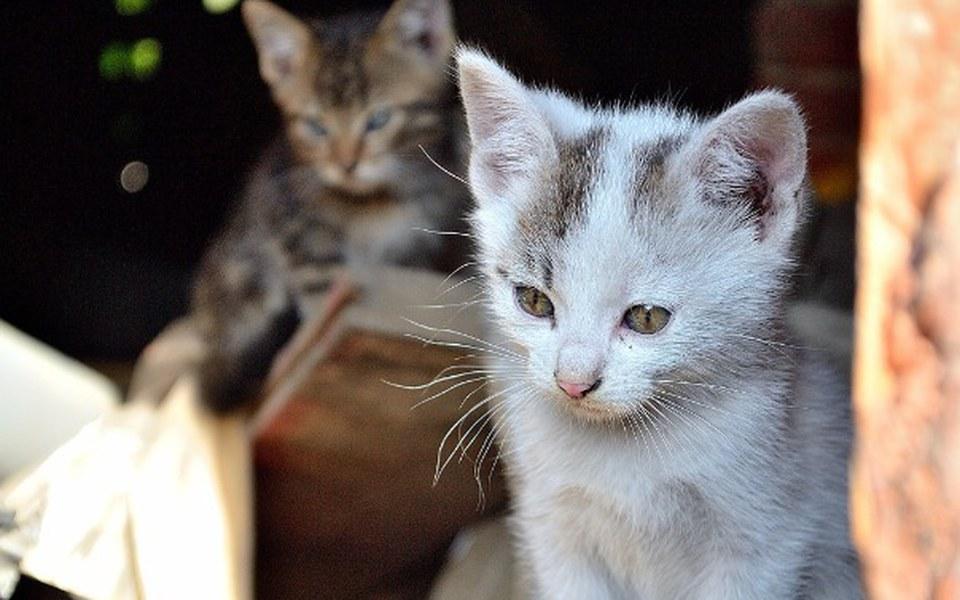 Zbiórka Na ratowanie kocich żyć - zdjęcie główne