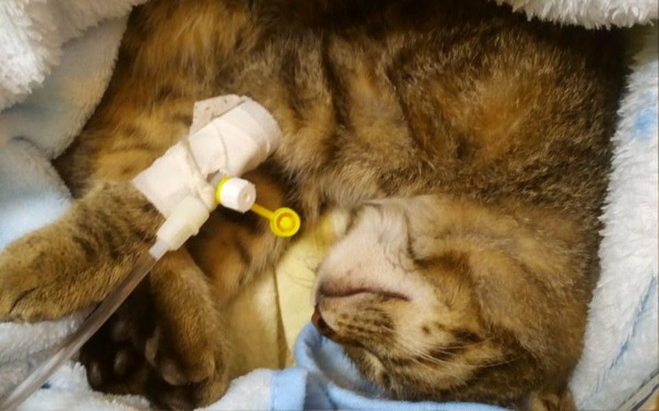 Zbiórka Merlice - potrącona kotka - zdjęcie główne