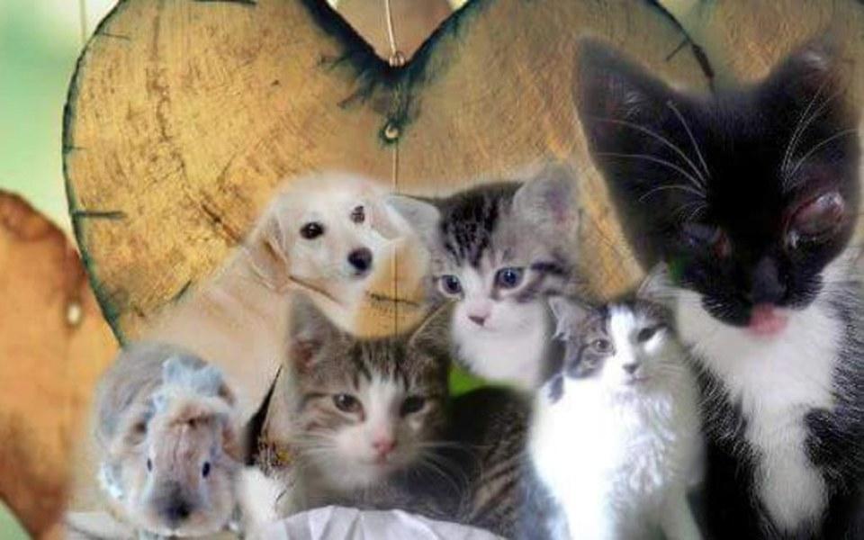 Zbiórka Na utrzymanie zwierzaków - zdjęcie główne