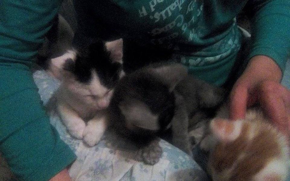 Zbiórka ratuję koty,szczeniaki,staruszki - zdjęcie główne