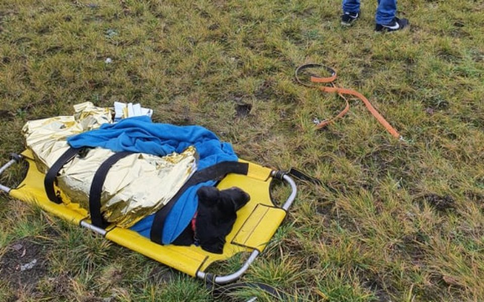 Zbiórka Ratujemy z wypadków KOTY I PSY - zdjęcie główne