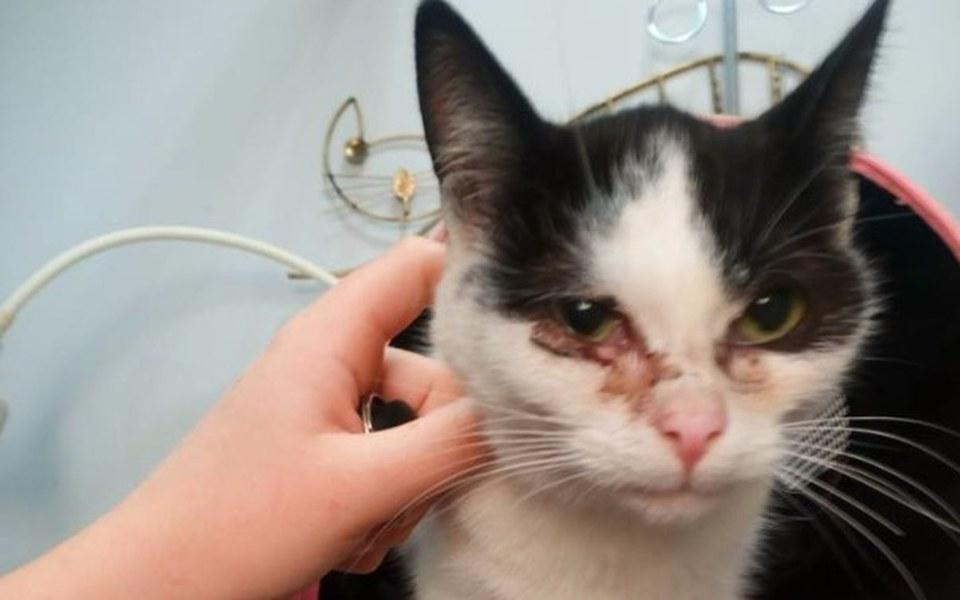 Zbiórka TAYLOR - zapłakana kotka - zdjęcie główne