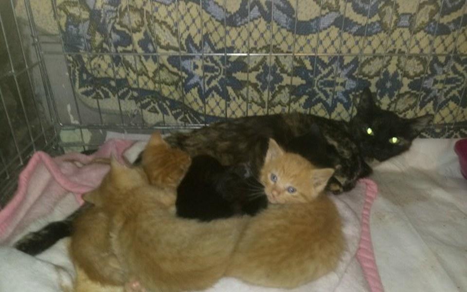 Zbiórka Dla kotów... - zdjęcie główne