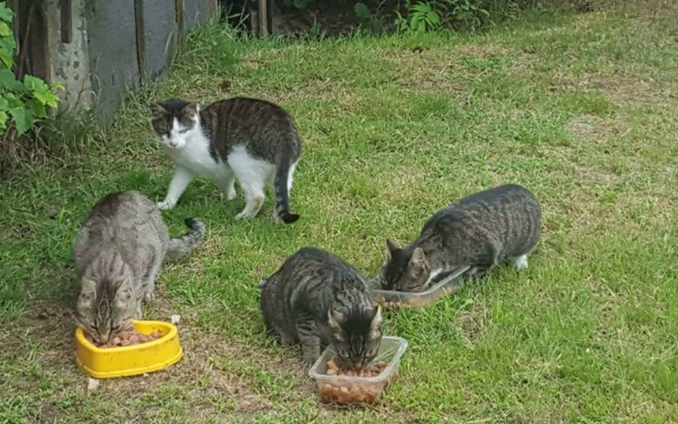 Zbiórka Kot nie ślimak domku nie nosi - zdjęcie główne
