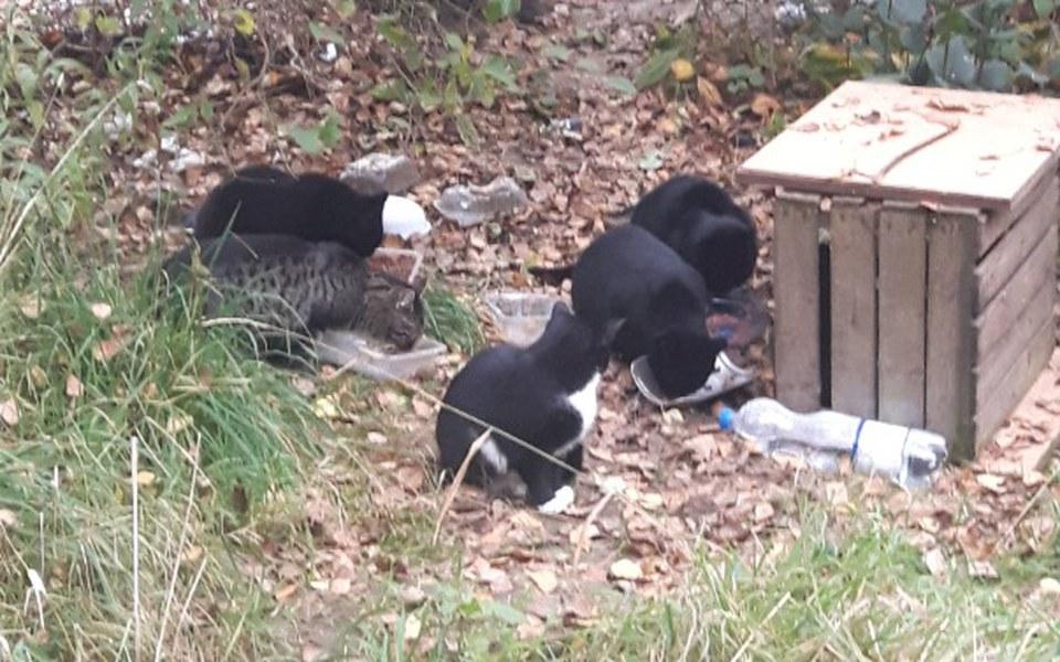 Zbiórka Karma dla bezdomnych kotów- Gda. - zdjęcie główne