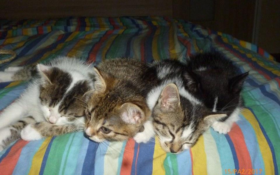 Zbiórka Polanowe koty proszą o wsparcie. - zdjęcie główne