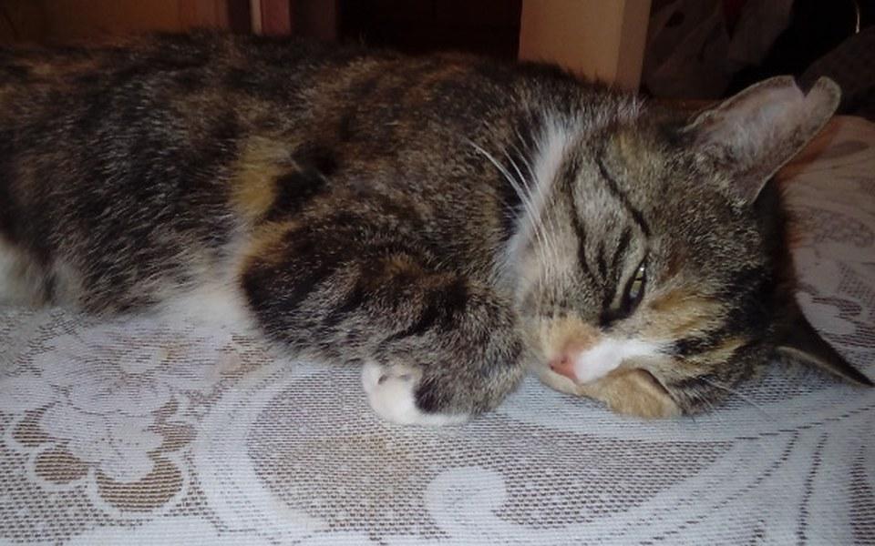 Zbiórka Chora kotka potrzebuje pomocy - zdjęcie główne