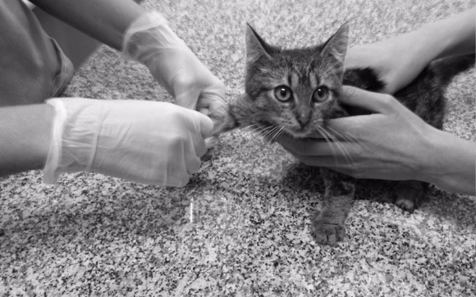 Zbiórka Faktury za leczenie kociaków - zdjęcie główne