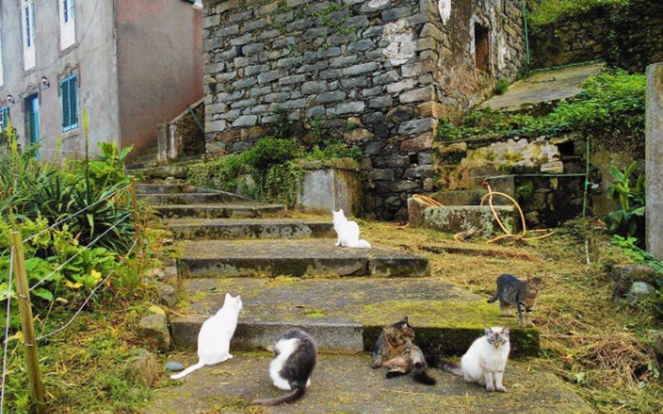 Zbiórka Schronisko Raj dla Kotów. - zdjęcie główne