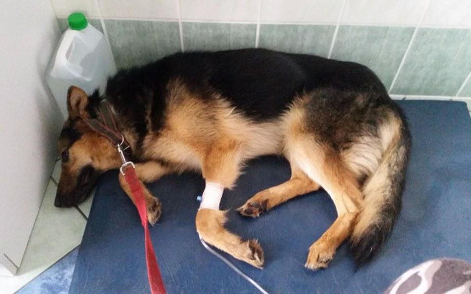 Zbiórka Schroniskowe psy PROSZĄ o pomoc - zdjęcie główne