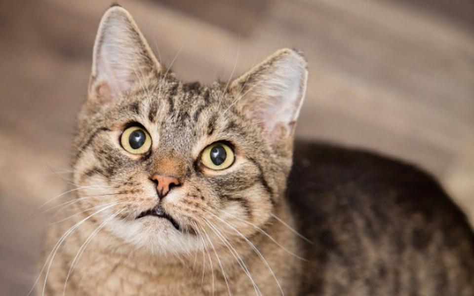 Zbiórka Potrzebna karma dla kotów z ulic - zdjęcie główne