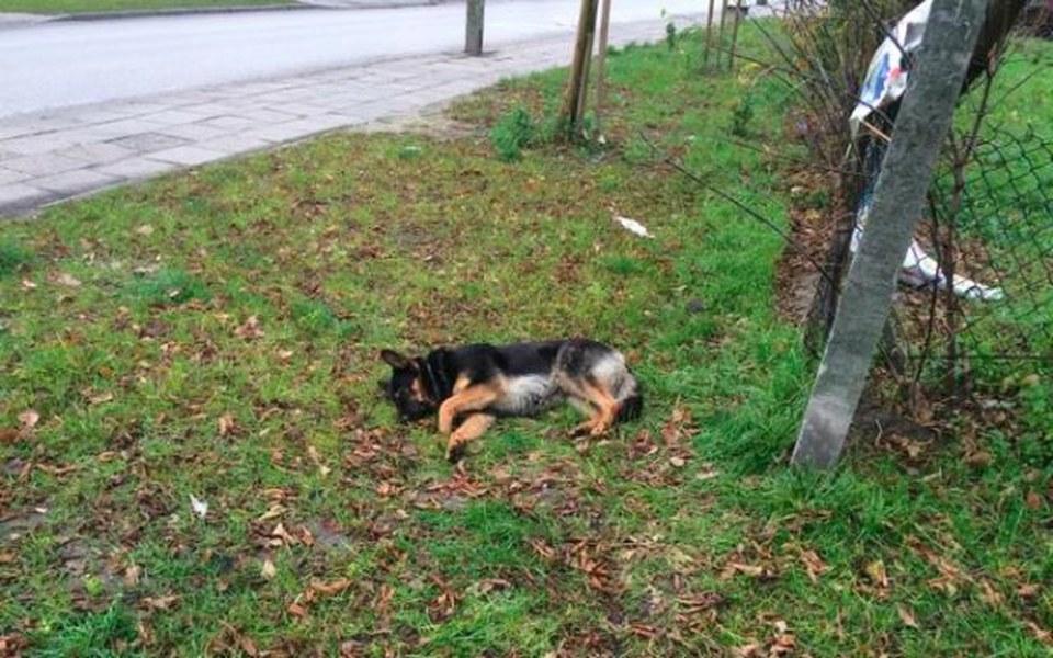 Zbiórka Operacja leczenie bezdomnego psa - zdjęcie główne