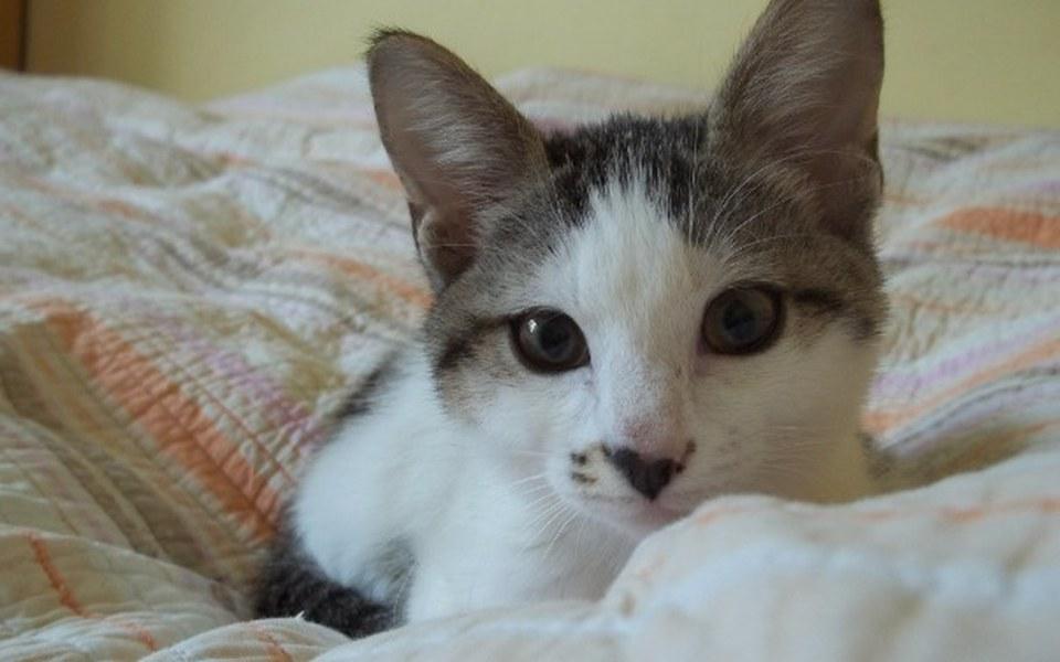 Zbiórka 11 kotów prosi o wsparcie! - zdjęcie główne