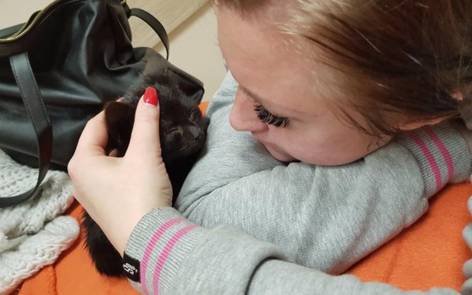 Zbiórka Leczenie bezdomnych kotów - zdjęcie główne