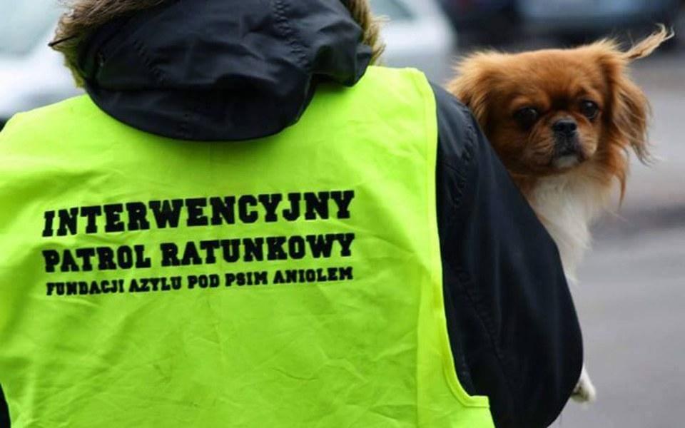 Zbiórka Psy potrzebują pomocy! - zdjęcie główne