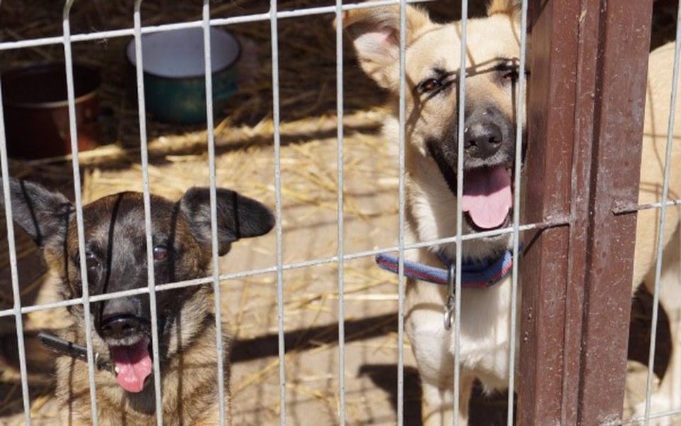 Zbiórka Paczka dla bezdomnego zwierzaka - zdjęcie główne