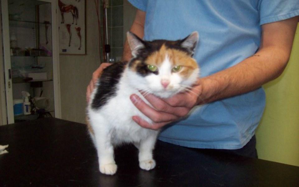 Zbiórka Bezdomne kotki-sterylizacja - zdjęcie główne