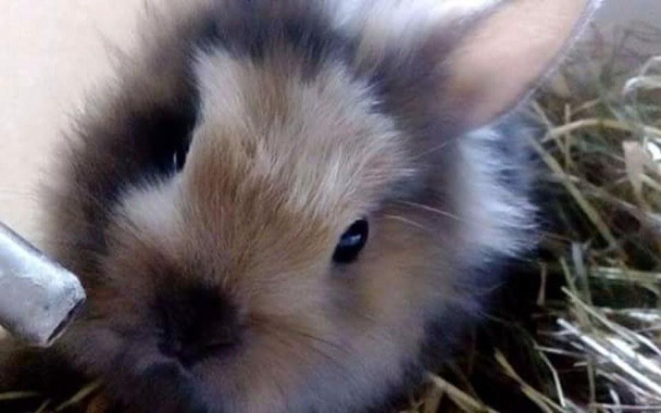 Zbiórka Zbiórka króliczka - zdjęcie główne