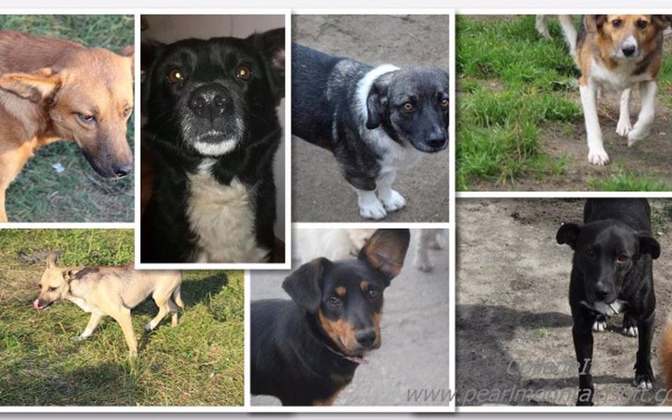 Zbiórka 7 psich nieszczęść... - zdjęcie główne