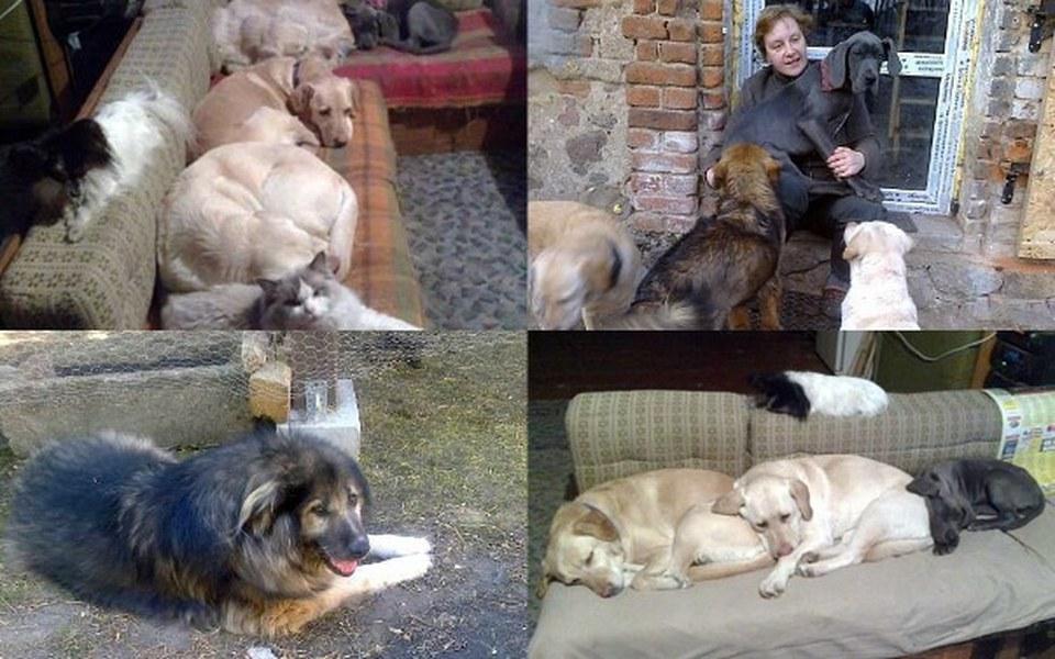 Zbiórka Pomoc w wykarmieniu zwierzaków - zdjęcie główne