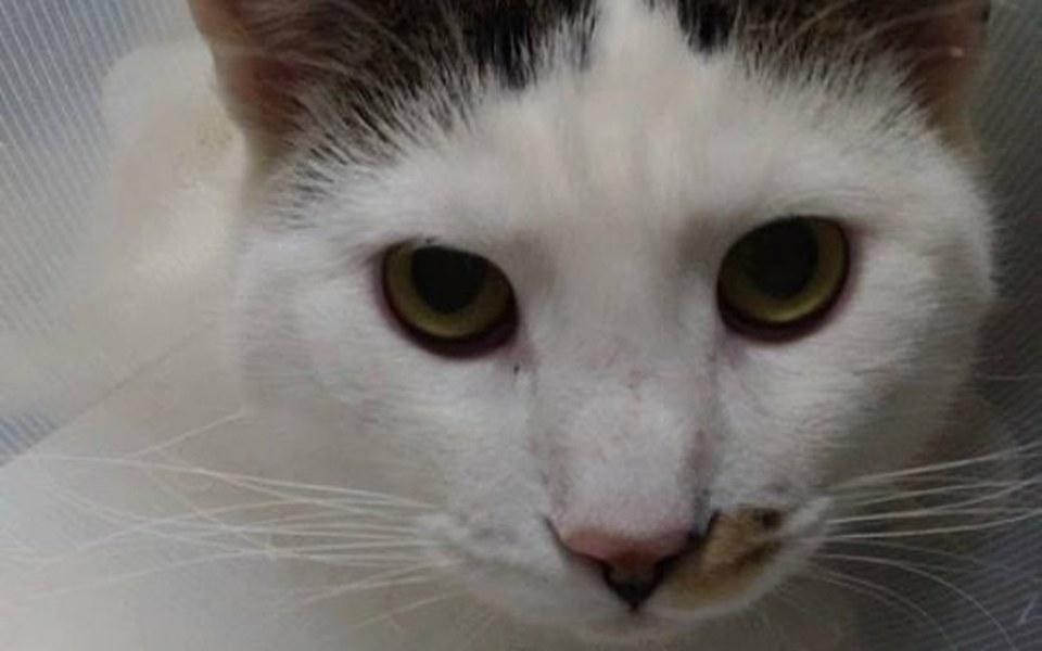 Zbiórka Żywcem wyrwał kotu genitalia! - zdjęcie główne