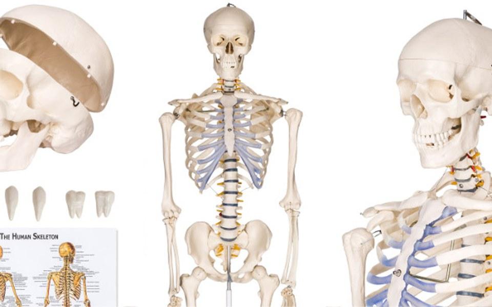 Zbiórka Szkielet Anatomiczny dla szkoły - zdjęcie główne