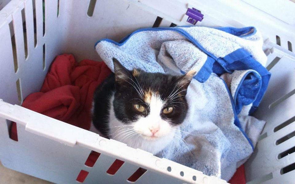 Zbiórka Połamana, poturbowana kotka - zdjęcie główne
